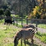 Мэтт Дэймон,Скарлетт Йоханссон ,Томас Хейден,Чёрч Колин,Форд Мэгги,Элизабет Джонс,Энгус МакФадьен,мы купили зоопарк, фильм мы купили зоопарк
