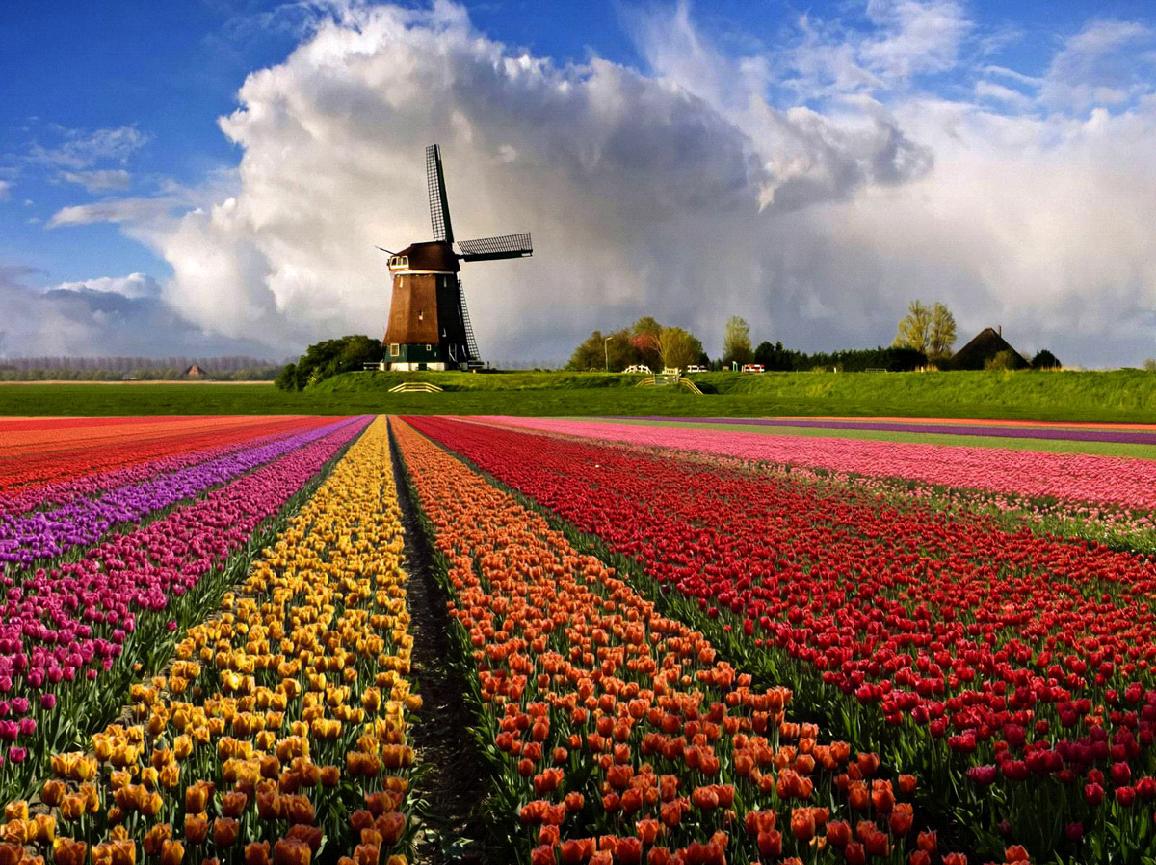 Цветочные традиции разных стран